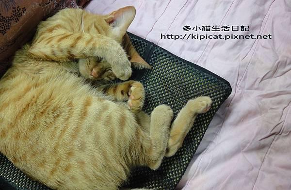 這樣睡就很舒服了啦(多小貓生活日記)