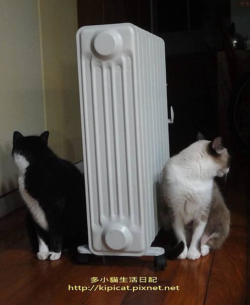 皮皮妮妮吹暖氣2(多小貓生活日記)