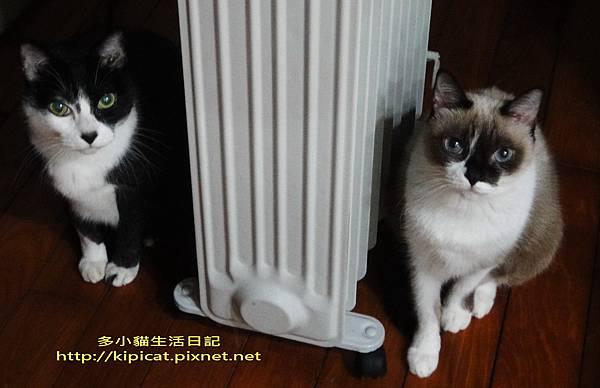 皮皮妮妮吹暖氣-雙胞胎的臉(多小貓生活日記)