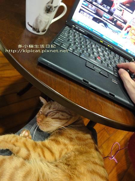 多小貓睡媽媽腿上(多小貓生活日記)