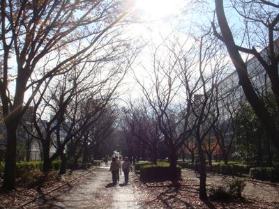 tsukuba04.jpg