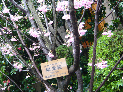 tsubaki07.jpg