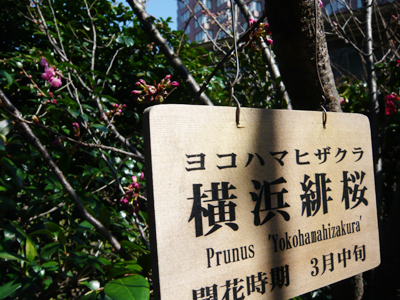 tsubaki12.jpg