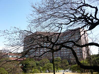 tsubaki14.jpg