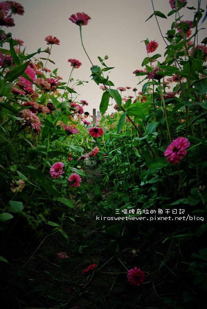 DSC_5479-1.jpg