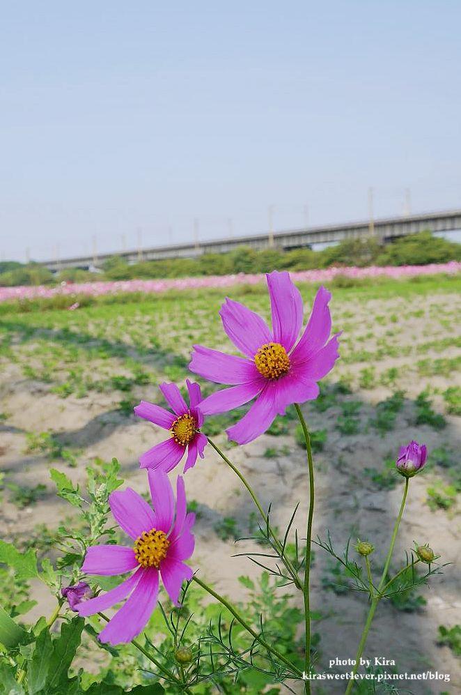 舊鐵橋 (27).jpg