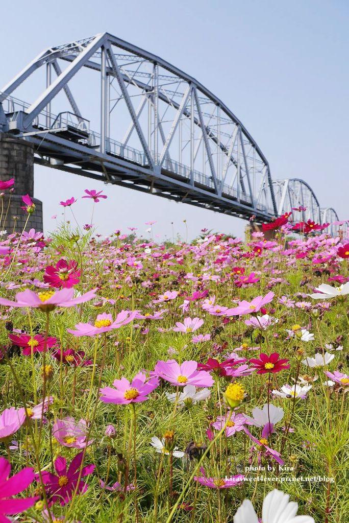 舊鐵橋 (32).jpg