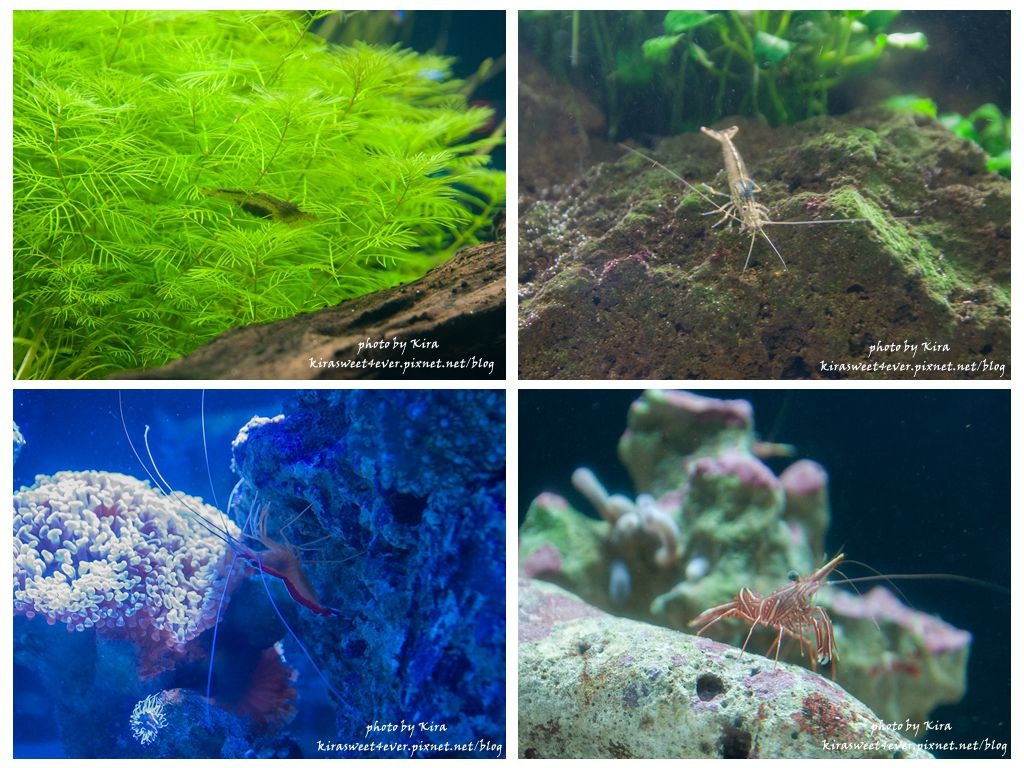 fish (13).jpg