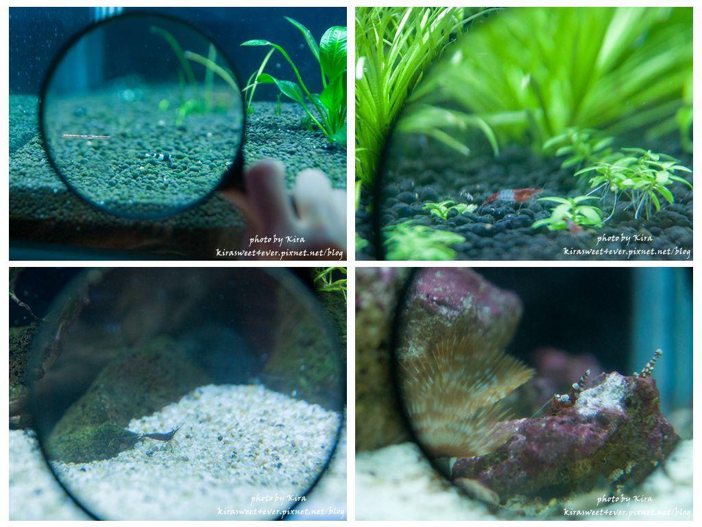 fish (14).jpg