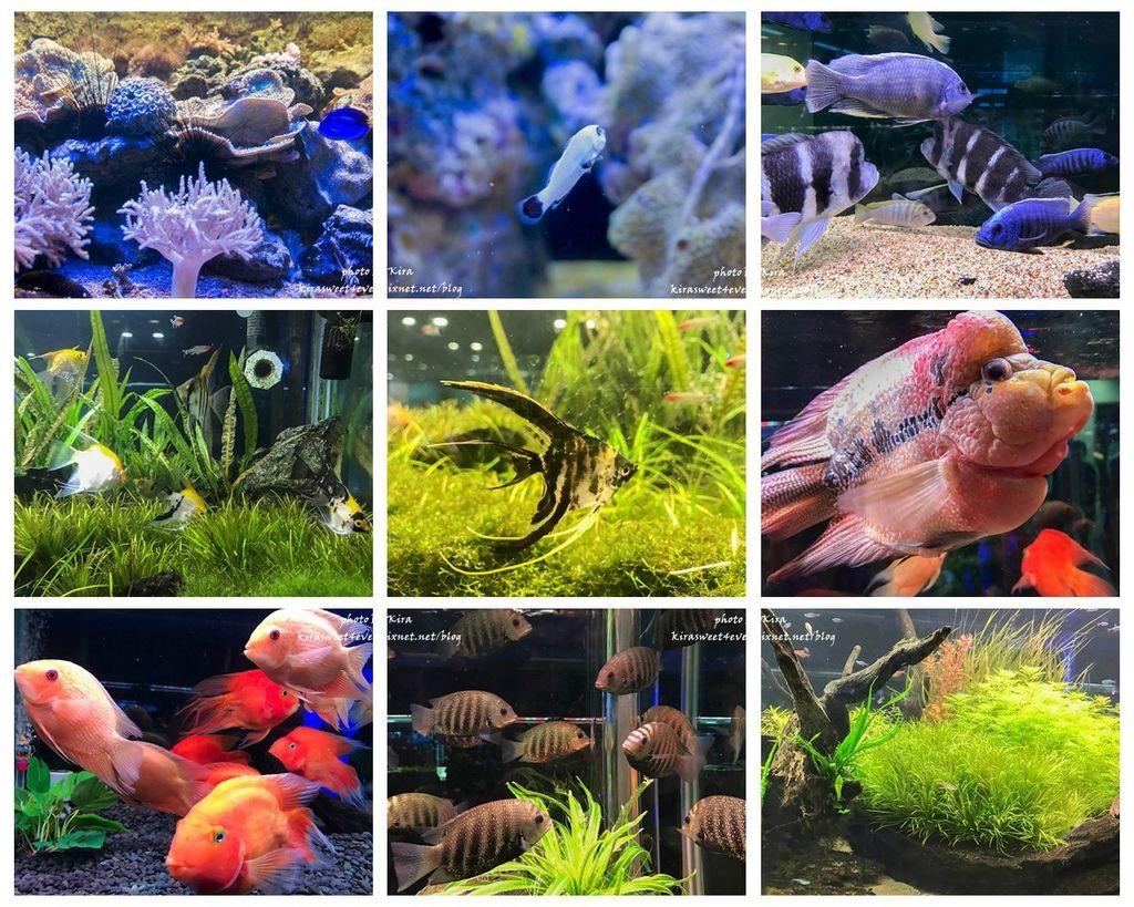 fish (16).jpg