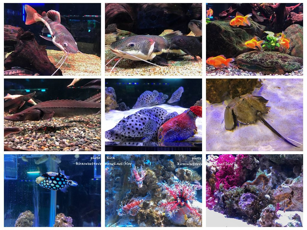 fish (18).jpg