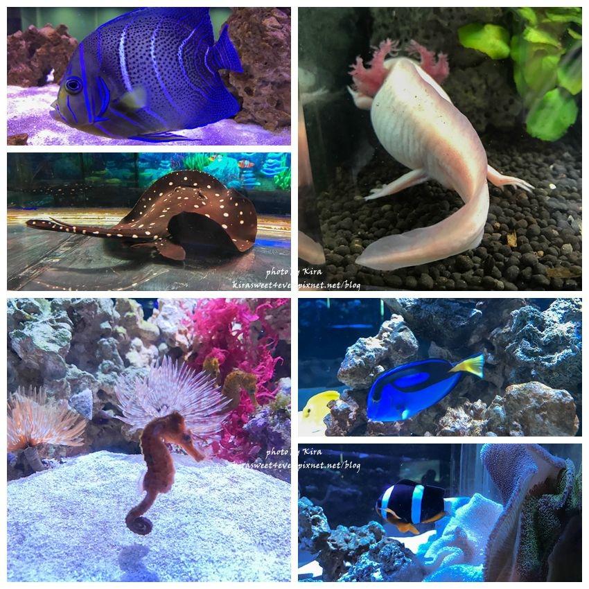 fish (19).jpg