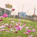 花 (3).jpg