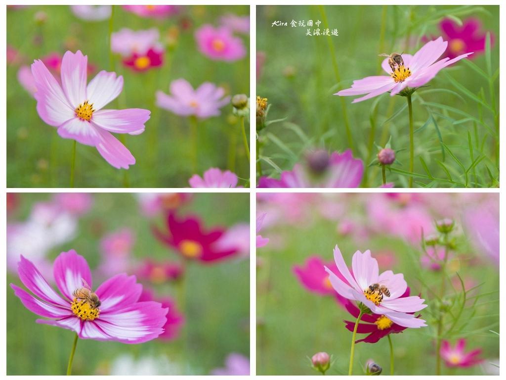 花 (4).jpg