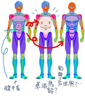 kirin人體示意3.jpg
