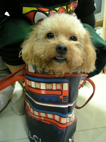 pinky很愛往袋子裡鑽