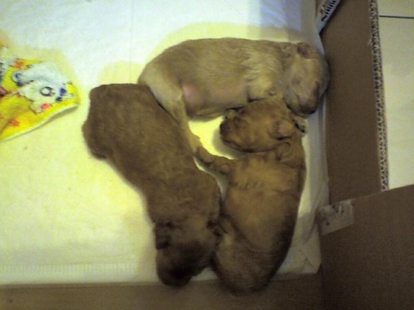 三隻像小老鼠