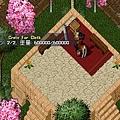 櫻花開花(1)