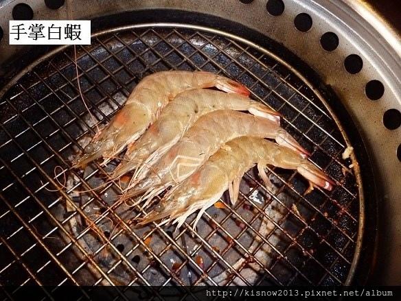 厲害43-白蝦.JPG