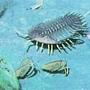 三葉蟲生活環境示意圖