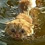 挺喜歡游泳