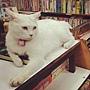 假如我是書店老闆