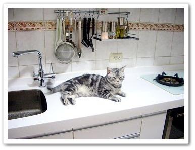 我家的廚房收納空間2.