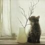 cat20.jpg