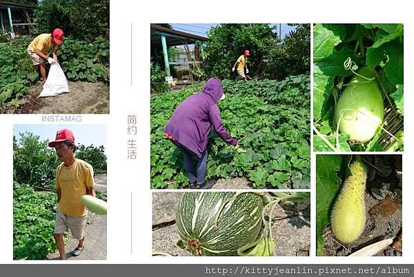 林媽媽小菜園採南瓜跟冬瓜
