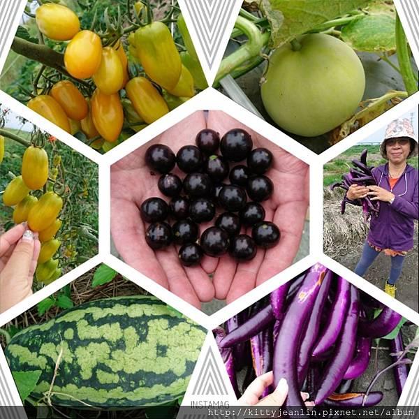 李家開心農場大豐收-開心採果趣