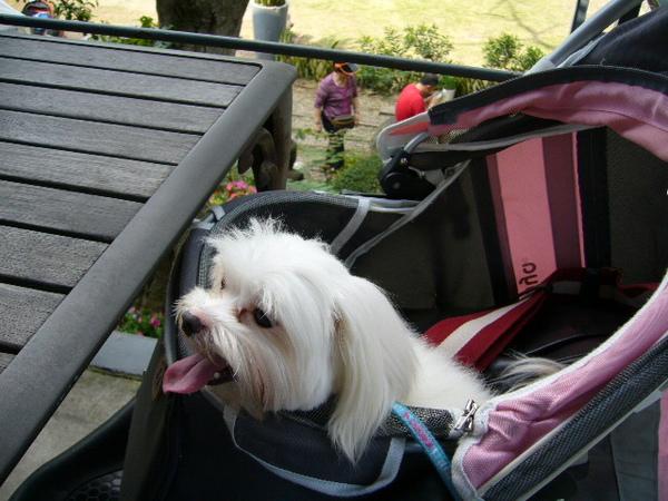 13.黃小熊在車車裡.JPG