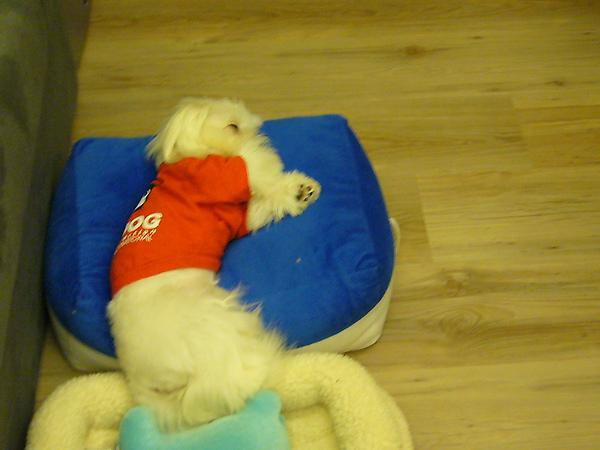 麻將枕.JPG