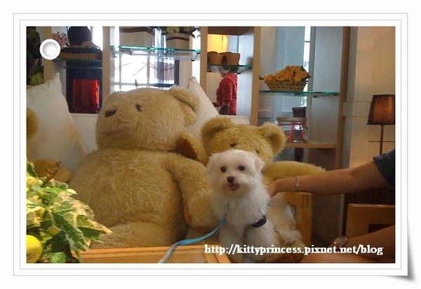 小熊與小熊們