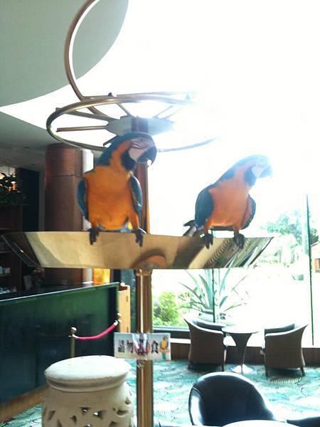 大廳鸚鵡.jpg