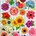 MW夏日貼紙 MW74550夏季花朵 $90