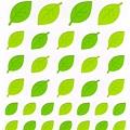 MW貼紙 JOY系列 MW74377joy綠葉 $75