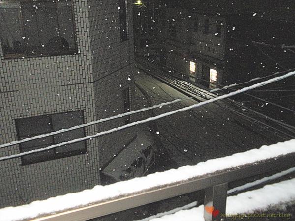 20100201 下雪了 (2).JPG