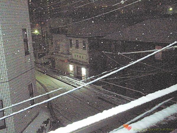 20100201 下雪了 (4).JPG