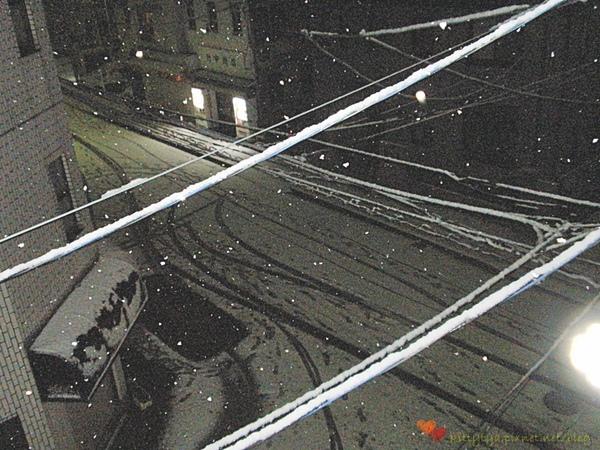 20100201 下雪了 (6).JPG