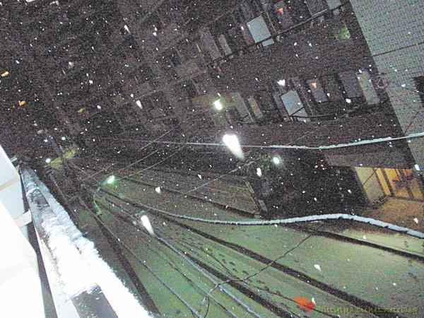 20100201 下雪了 (10).JPG