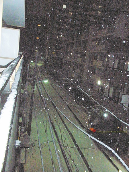 20100201 下雪了 (11).JPG