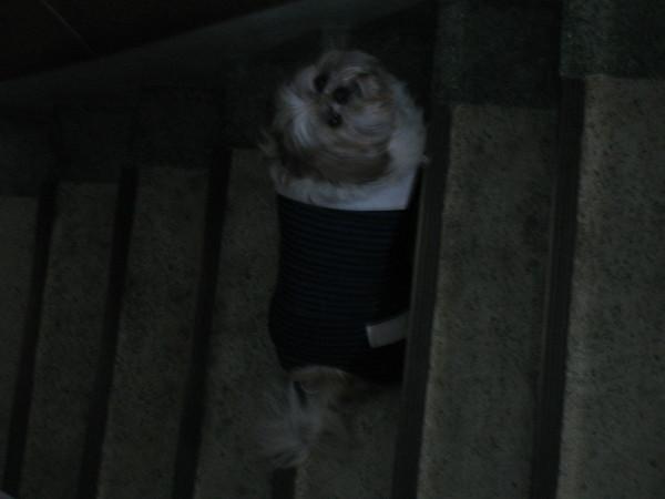 爬樓梯.JPG