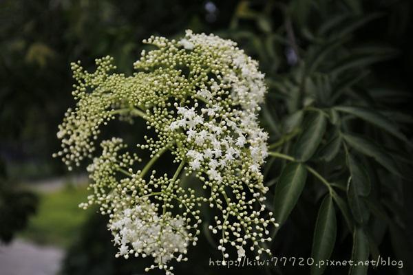 _MG_9123