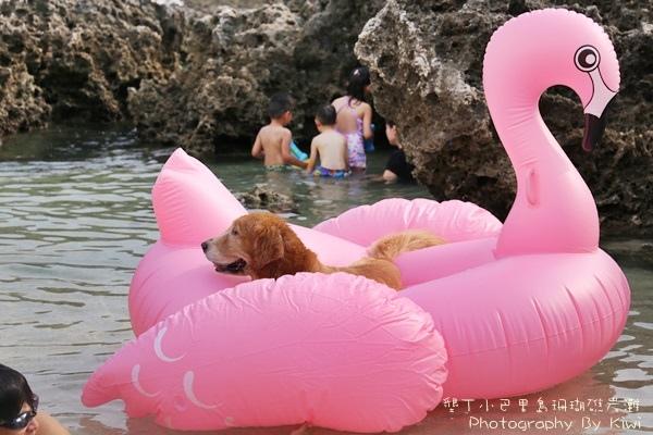 屏東墾丁小巴里島珊瑚礁岩灘恆春景點親子遊玩水0634