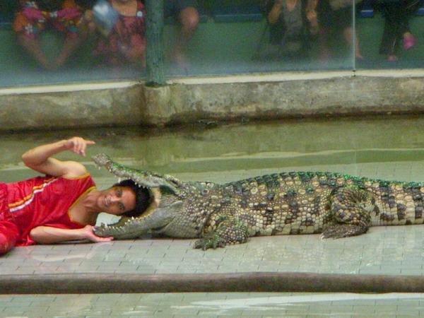 鱷魚內的頭