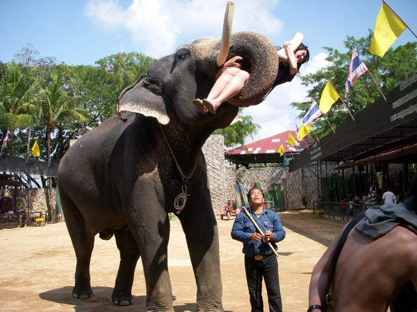 東芭樂園+大象表演