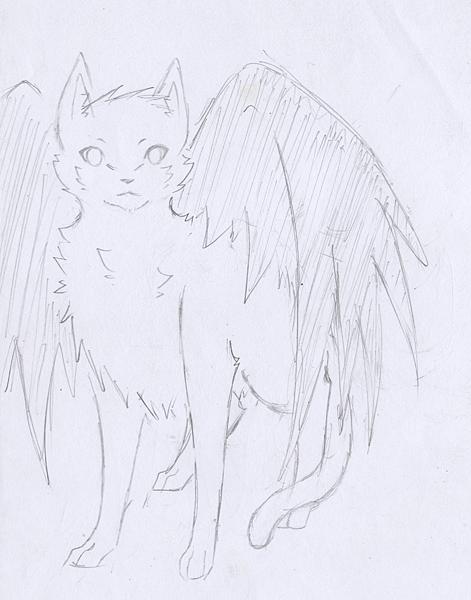 白貓黑翅.png