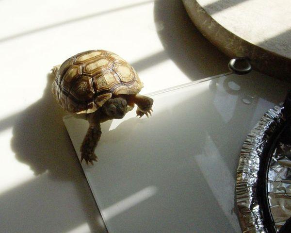 小陸龜.jpg