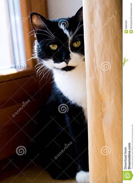 掩藏在帷幕后的-白猫-32867867
