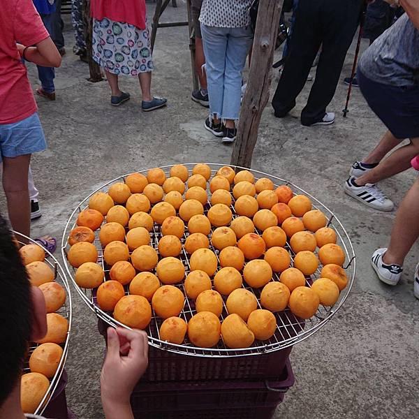 味衛佳柿餅觀光農場 曬柿餅 一顆顆金黃飽滿的柿子